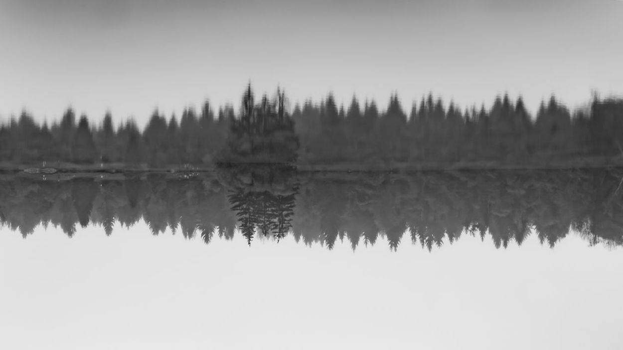 Black and white calm forest smooth lake with reflections. Downtown Lakeview Trees Beauty In Nature Blackandwhite Clear Sky Day Down Under Forrest Lake Lake View Nature No People Outdoors Reflection Scenics Sky Symmetry Tranquil Scene Tranquility Tree Water Waterfront Woods