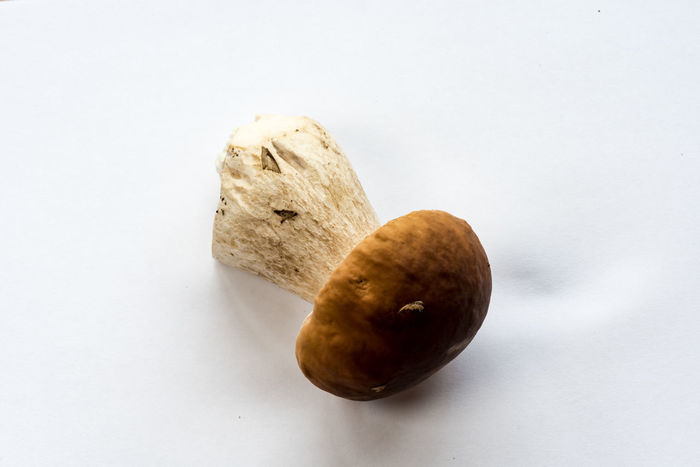 king bolete, Boletus edulis, Steinpilz Close-up Day Food Food And Drink Freshness Fruit Healthy Eating No People Ready-to-eat Studio Shot White Background