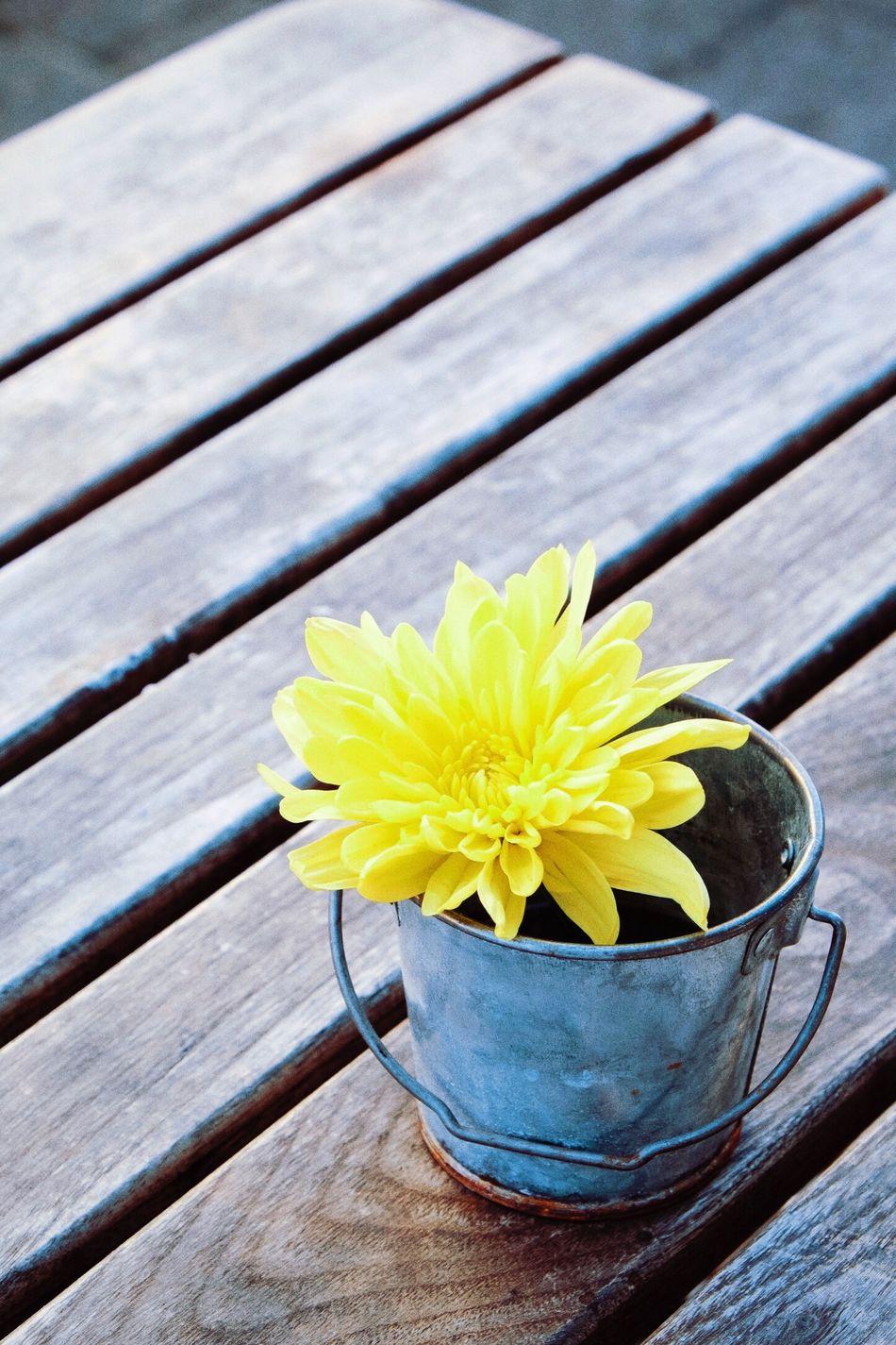 Beautiful stock photos of table, Boardwalk, Botany, Bucket, Close-up