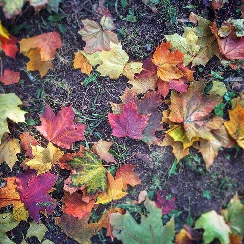 Autumn Hi Autumn
