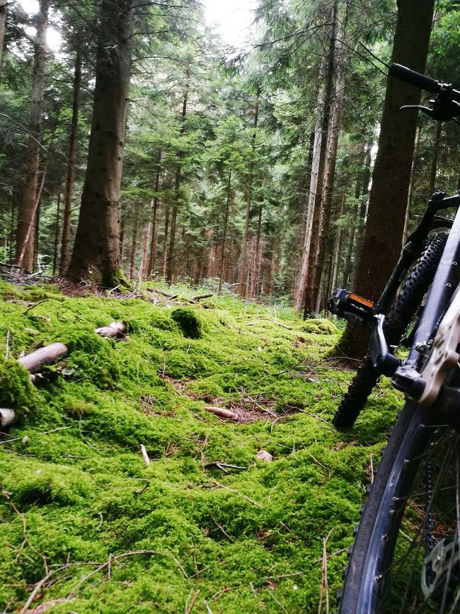 Alone somewhere in a Frenchwood just with my bike