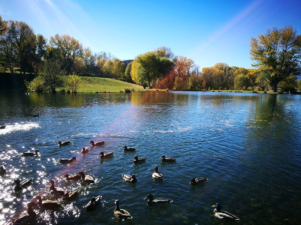 Saillagouse Sky Water Lake Reflection Nature No People Outdoors Beauty In Nature Ducks