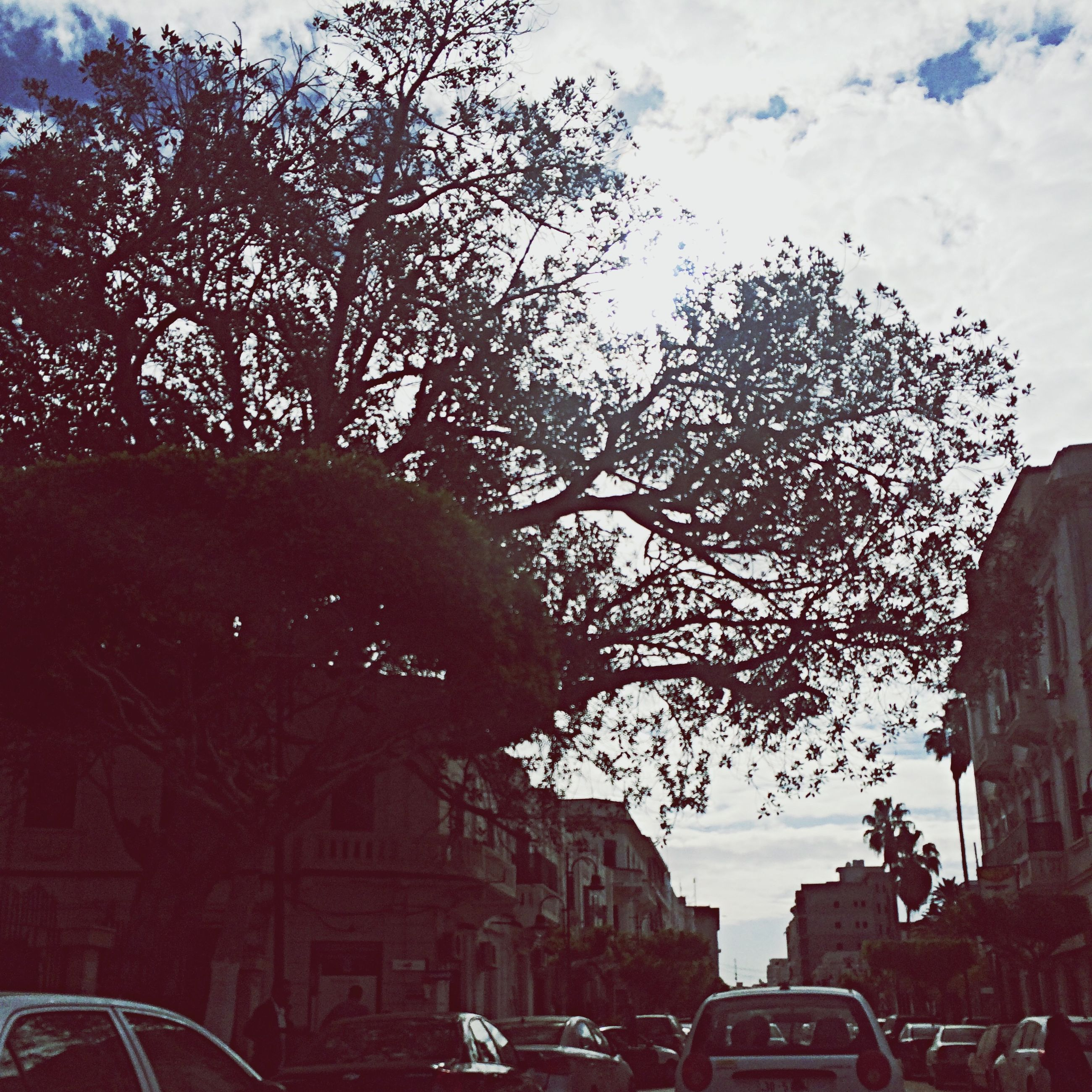 building exterior, architecture, built structure, land vehicle, car, transportation, tree, sky, mode of transport, city, low angle view, bare tree, street, branch, travel, outdoors, cloud - sky, building, day, road