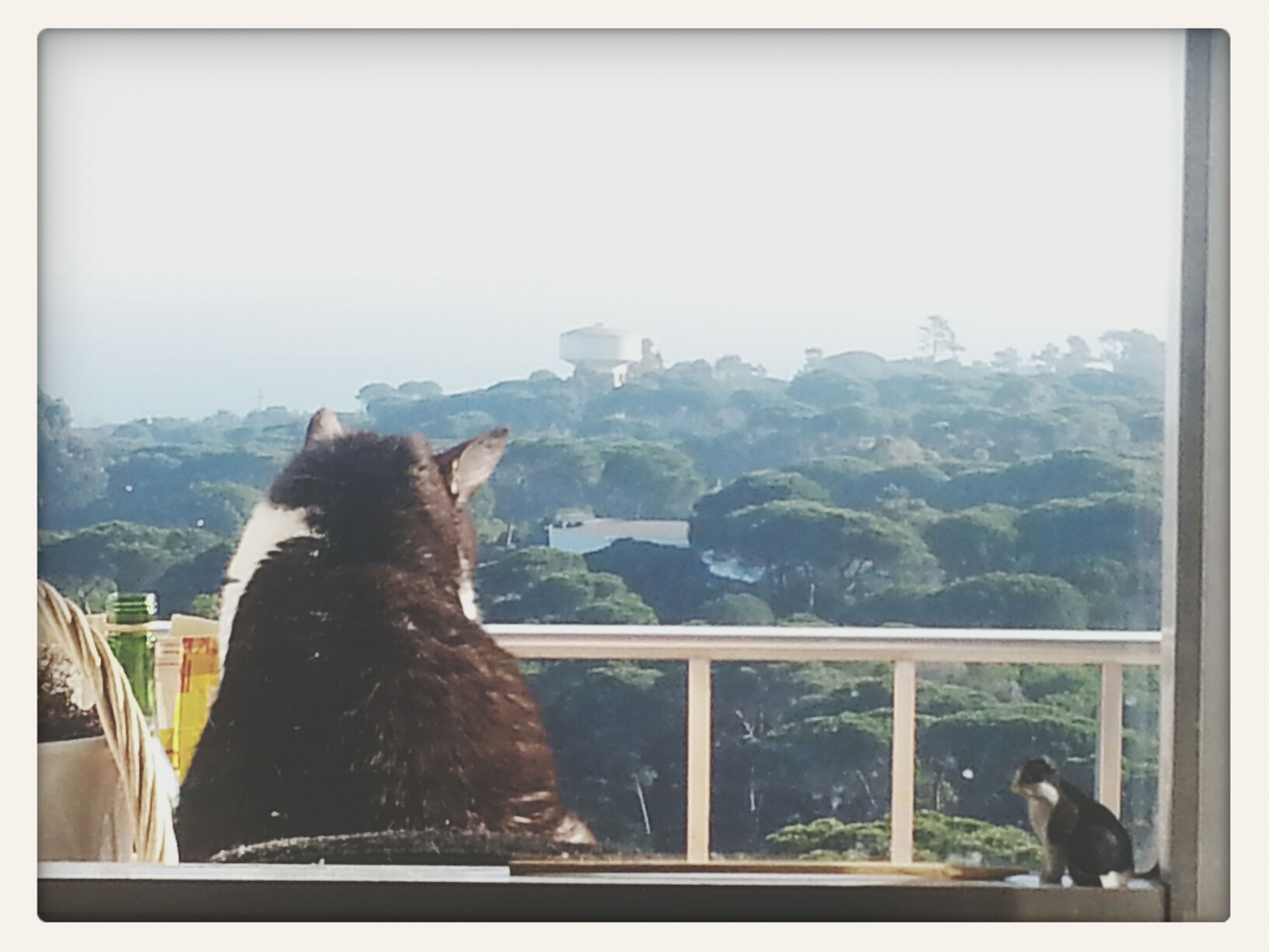 animal themes, domestic animals, pets, one animal, mammal, transfer print, window, indoors, auto post production filter, dog, looking through window, glass - material, domestic cat, clear sky, transparent, cat, sitting, copy space, two animals, looking