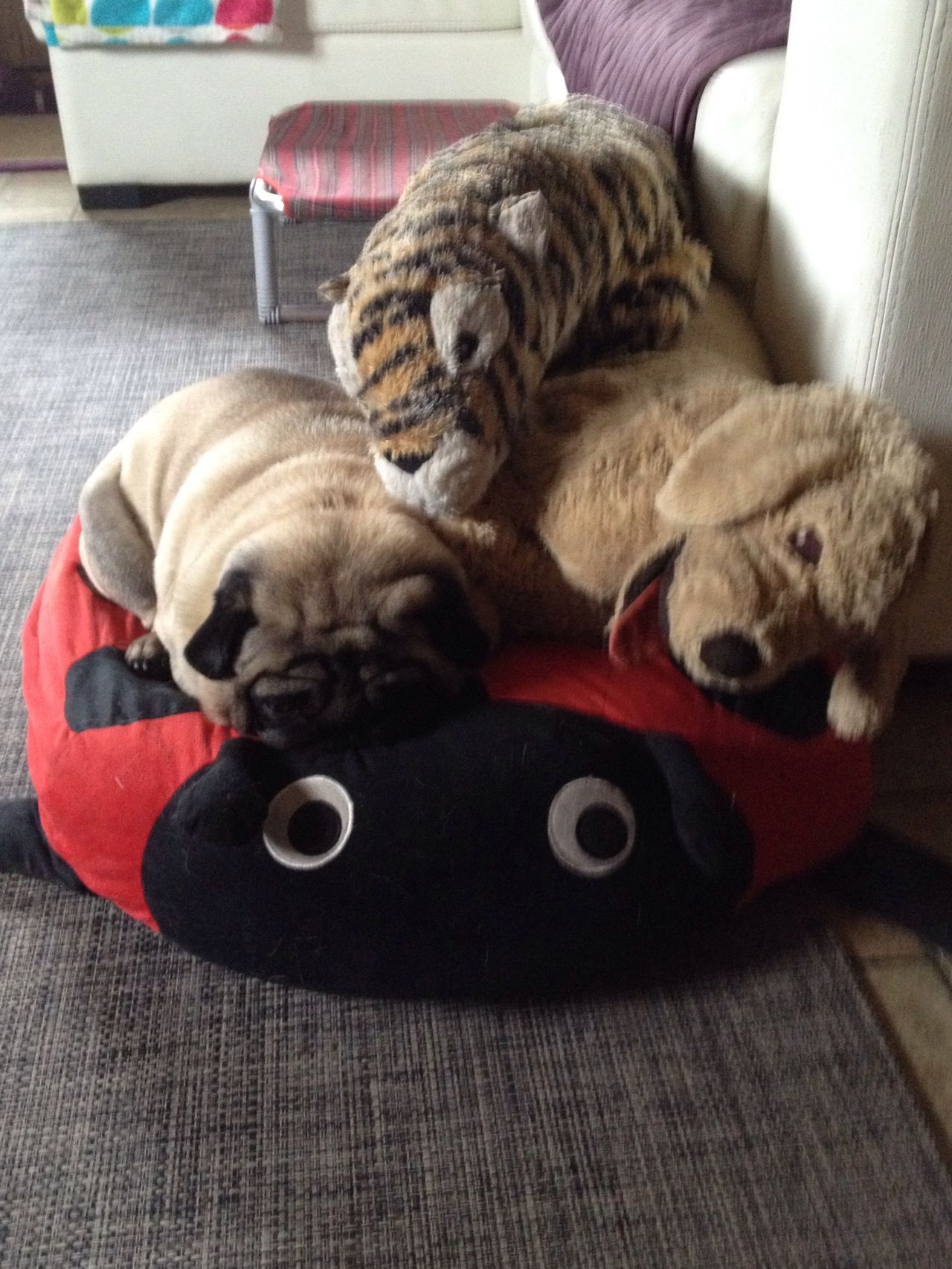 Peluche Relaxing Pug Mimetism Peluche Mimetismo Dormire Buffo Coccinella Intruso  SiestaTime Where Are You? Nanna Friends Rosso Carlino Pet Pets Pennichellapomeridiana Domenicadacoma Cuscino Pillow Cute Pets Pug Life  Pugs Puglife