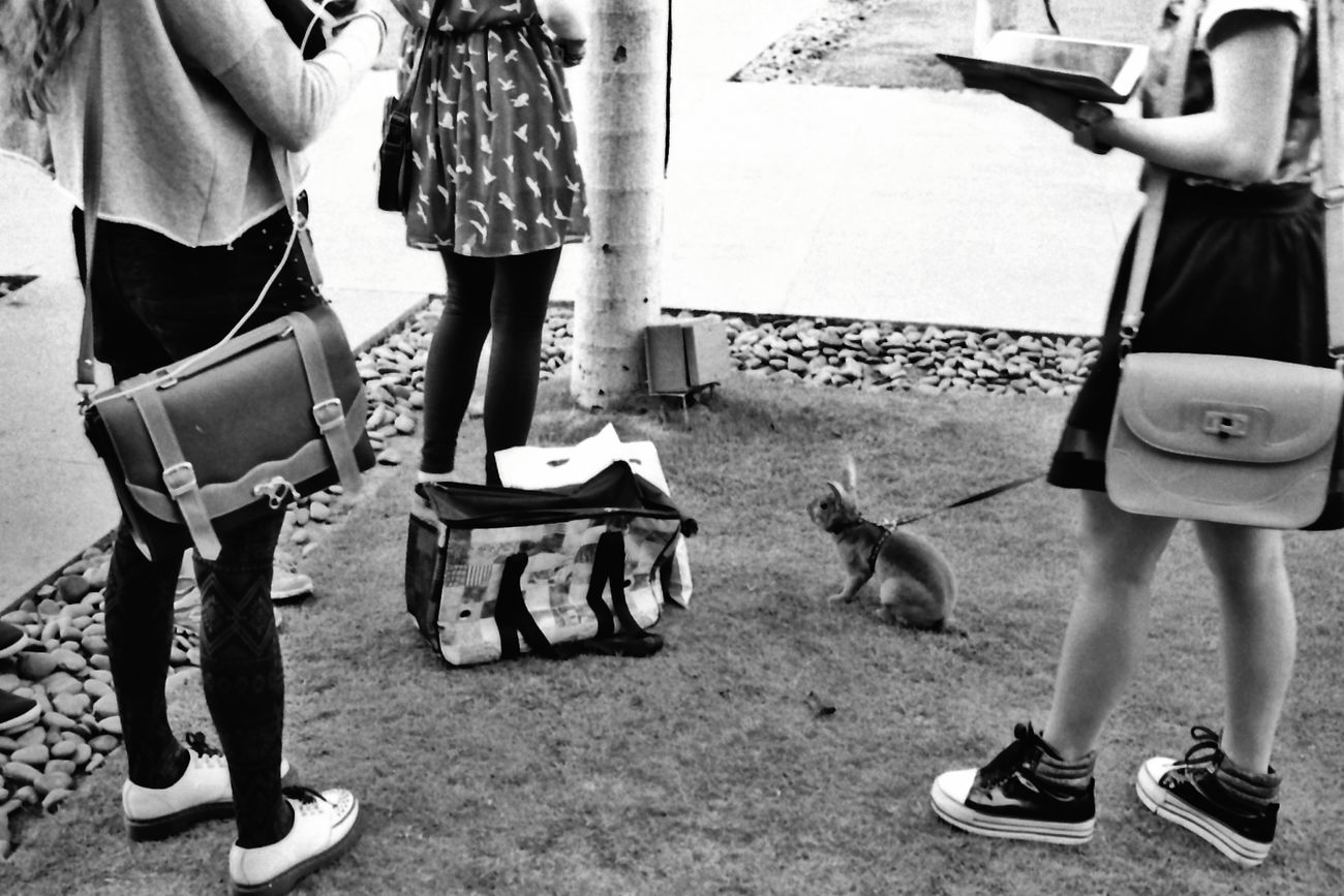 Bunny Walking Leicamp 35mm Summarit