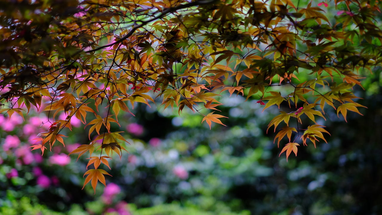 Colours - Fujifilm X-T1 - 56mm F1.2 56mm Beauty In Nature Branch F1.2 Flower Flowers Fujifilm Growth Leaf Leaf Vein Leaves Nature Outdoors Shallow Depth Of Field Tranquility Tree X-T1