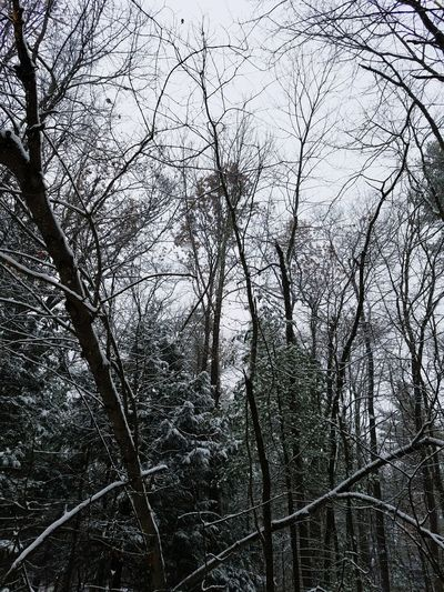 Snow Dead Trees Dead Backgrounds Nature Low Angle View Branch Tree Full Frame No People Outdoors Sky Beauty In Nature Fragility