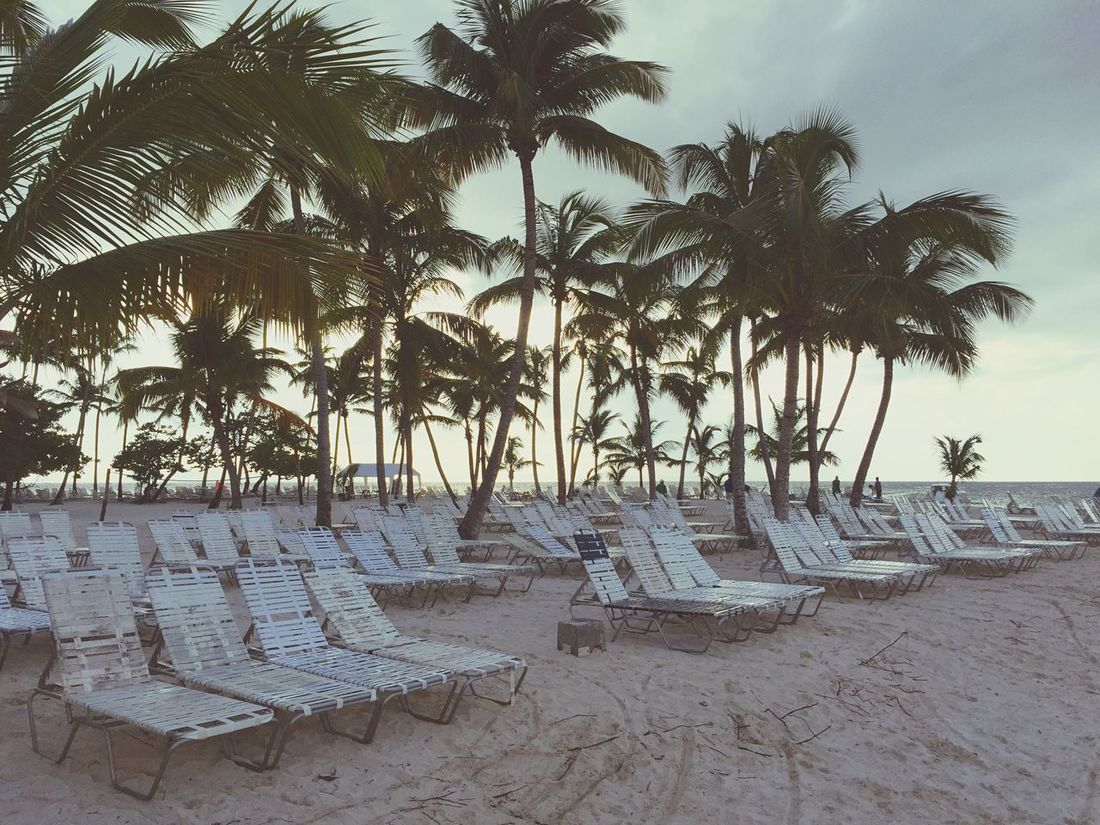 Beach Empty Beach Sunbeds Empty Sunbeds No People Palm Trees Seaside Shore Island Evening Summer Summertime Summer Views Holiday Vacation Day Ending Plage Empty Empty Places Faded