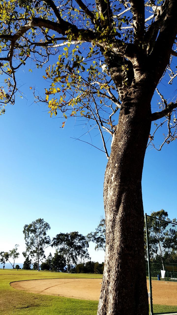 tree, tree trunk, branch, growth, nature, low angle view, beauty in nature, day, no people, tranquility, outdoors, scenics, blue, clear sky, sunlight, sky, flower, freshness