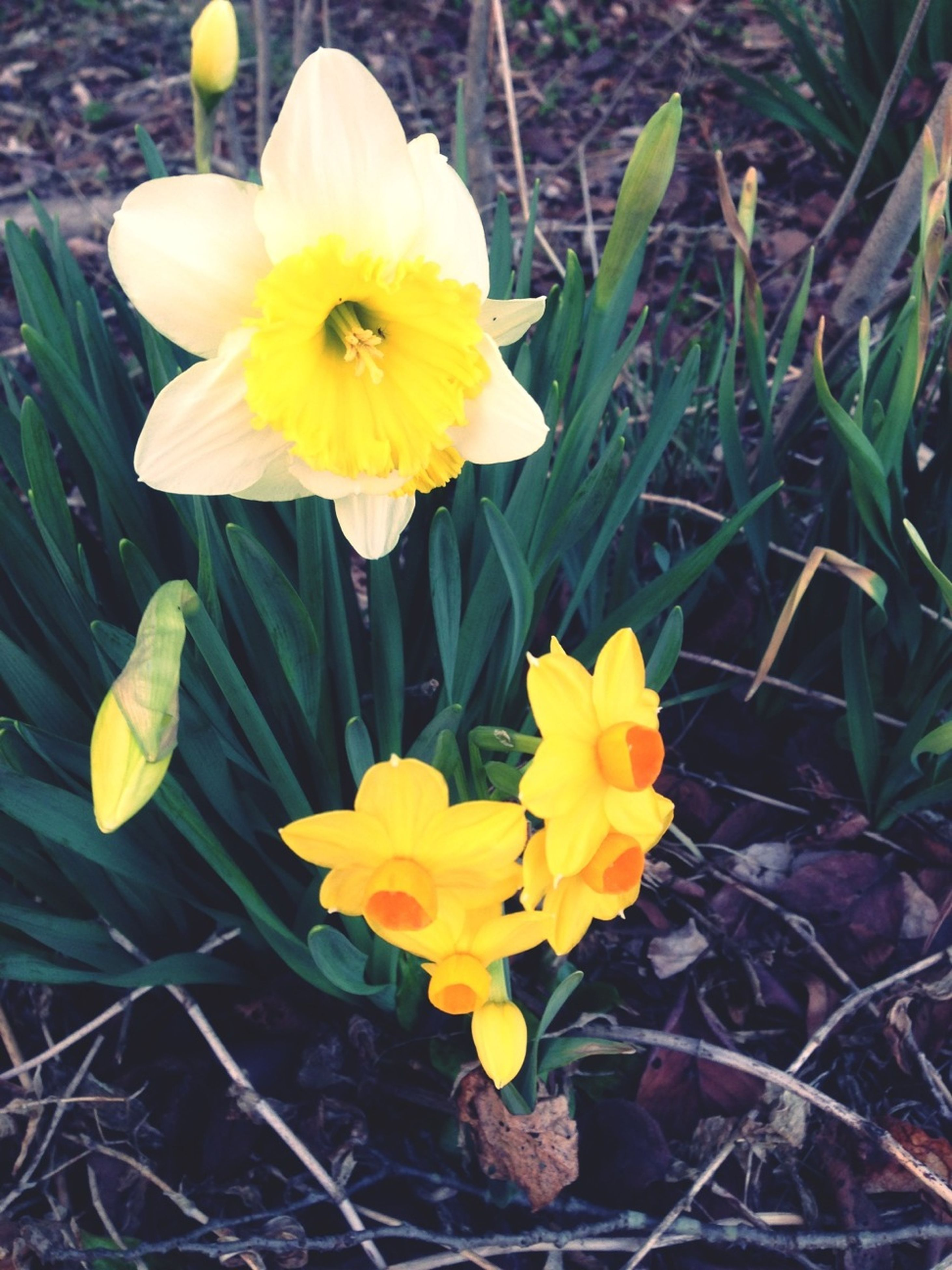 flower, petal, yellow, freshness, fragility, flower head, growth, beauty in nature, blooming, nature, close-up, plant, high angle view, in bloom, daffodil, pollen, stem, blossom, day, springtime