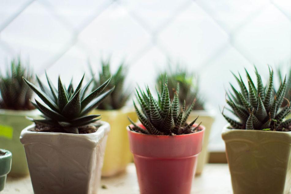 Beautiful stock photos of pflanzen, Brown, Horizontal Image, cactus, close-up