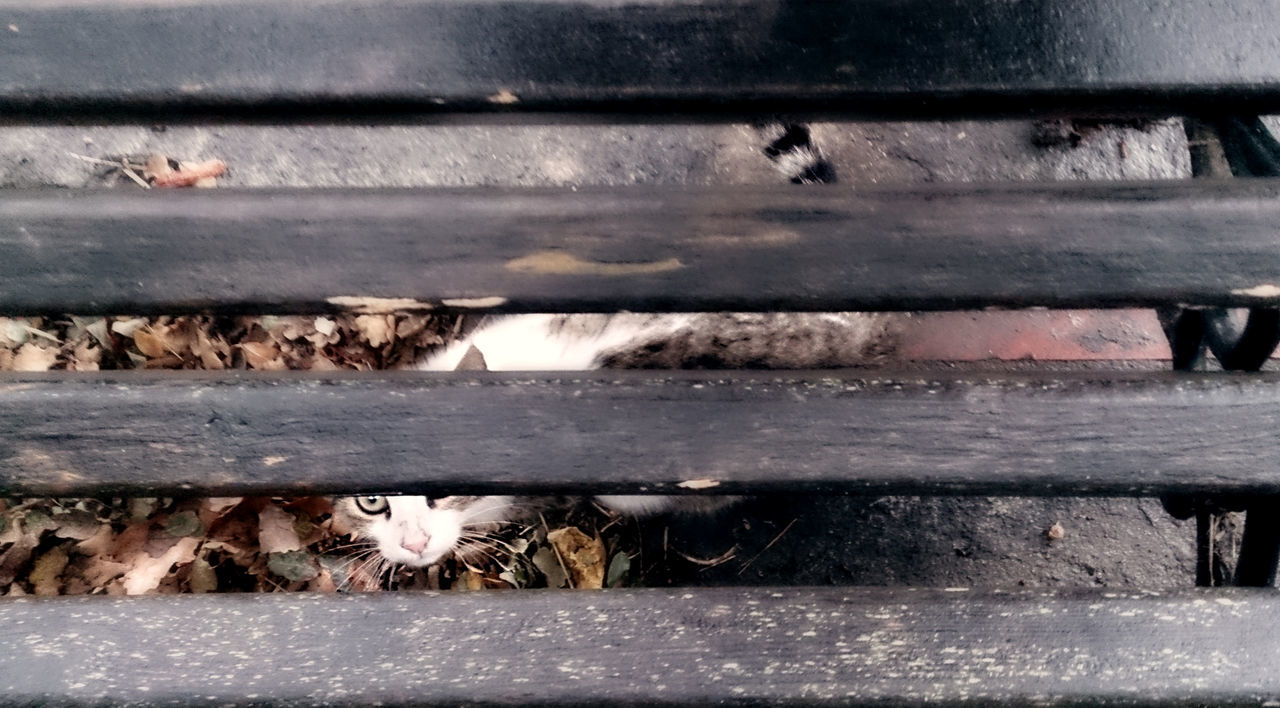 Stray cat peeking from under a bench in a rainy day. Animal Animal Themes Autumn Bench Cat Curious Dark Day Feline Friend Hiding Homeless Kitten Looking Outdoors Peeking Raining Rainy Scared Shy Stray Under Urban Wet Wooden