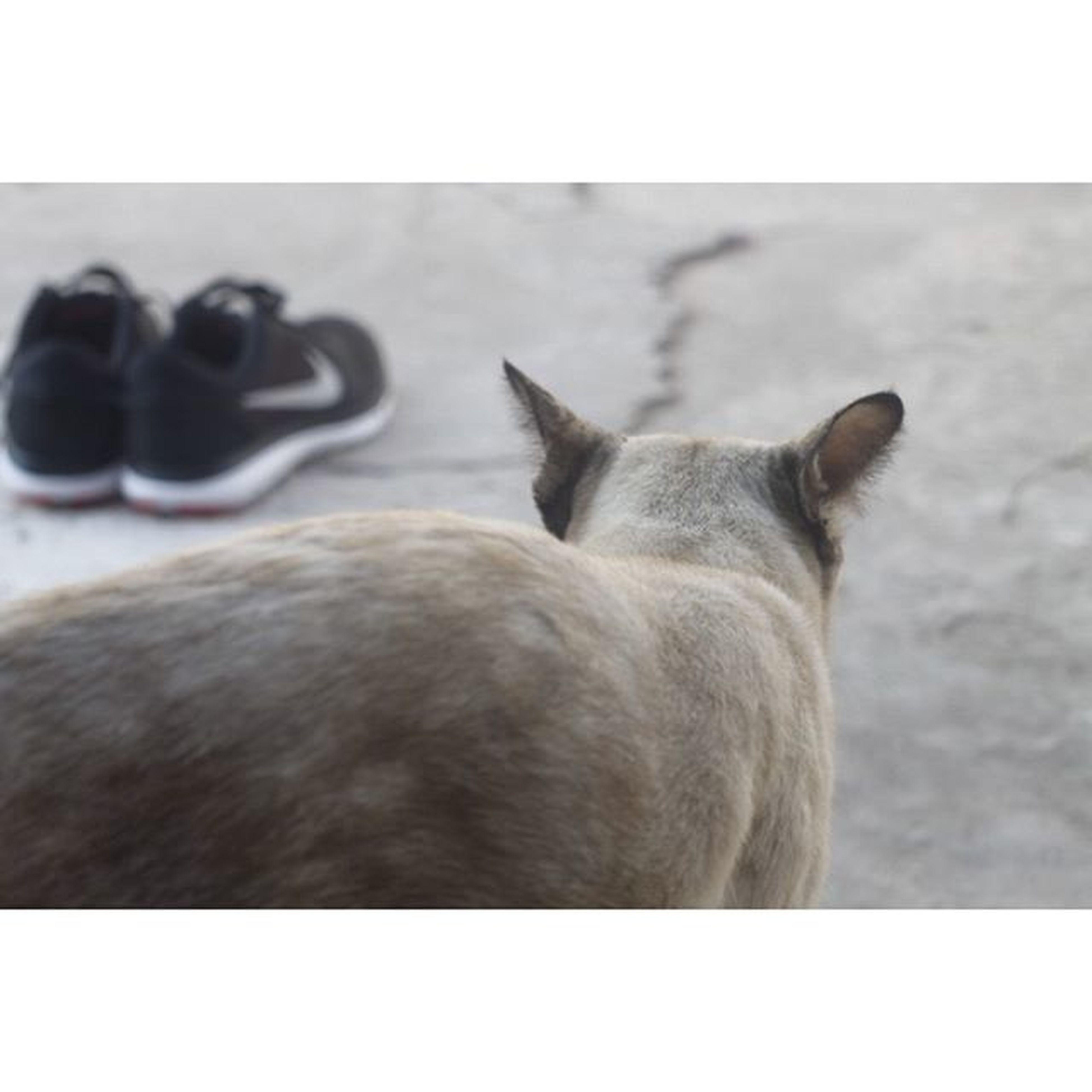 ไอ่เหมียว~ นั่นแกจะทำอะไร? [ 小猫!你干什么?] Nike Nikeflex2015 Gymshoes Cat