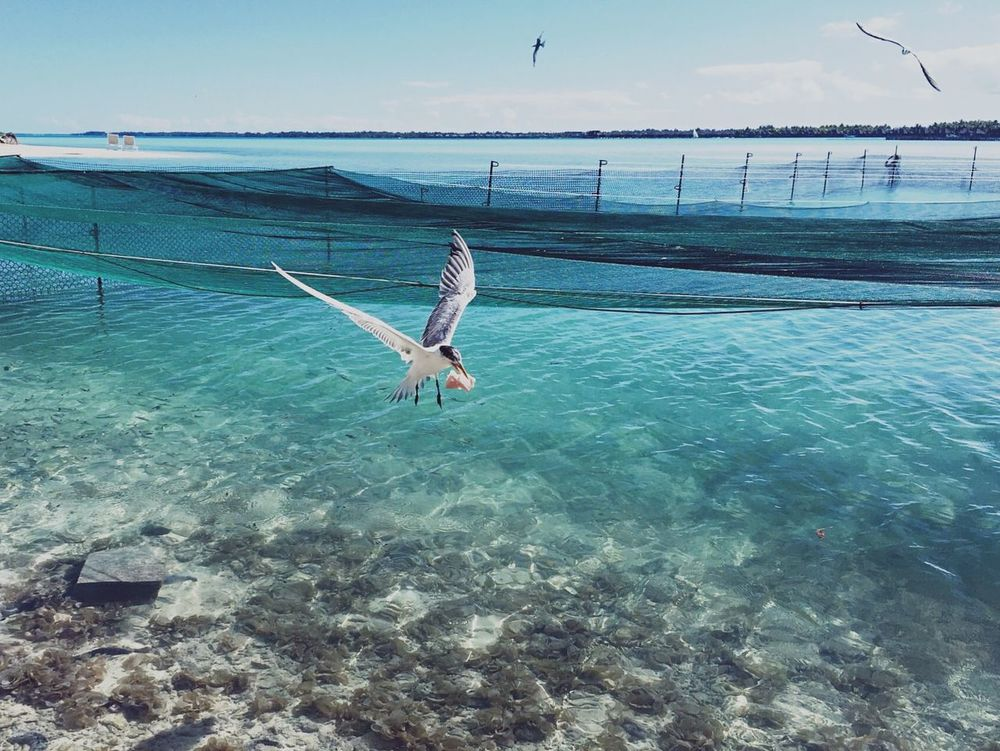 First come, first served Birds Flying Ocean Capture The Moment Bora Bora  Deceptively Simple