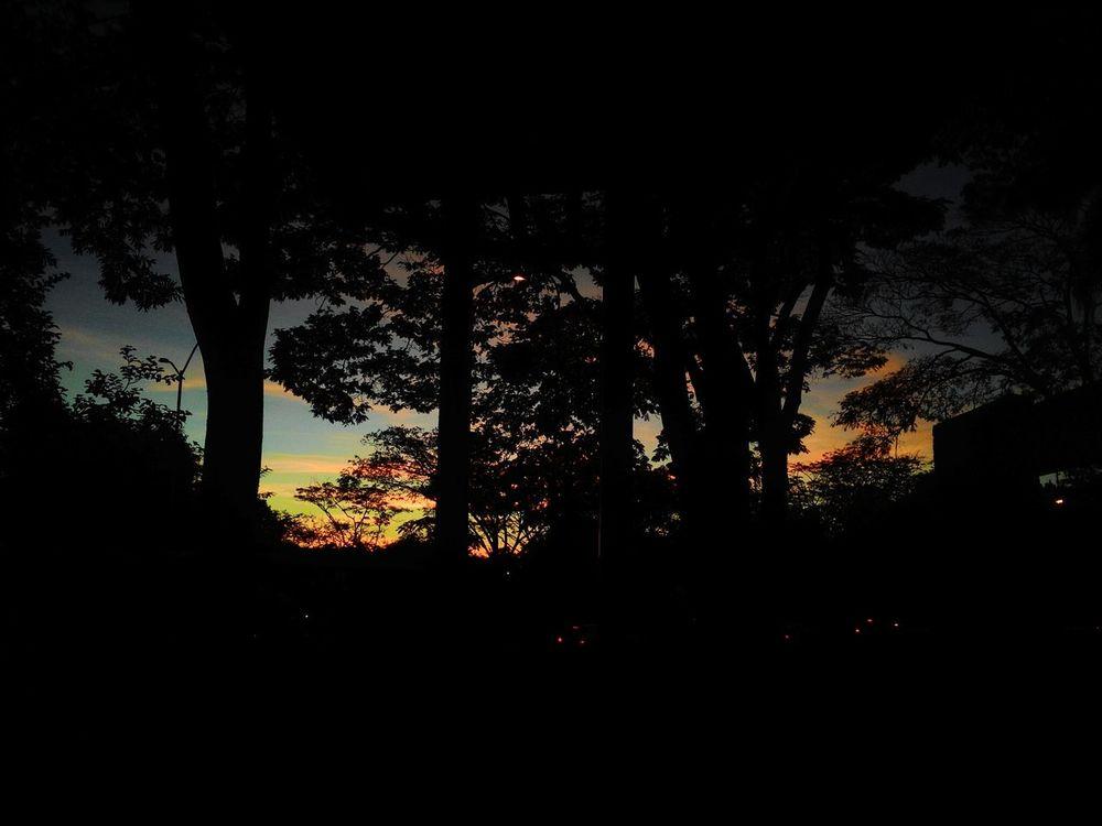 Nature Tree Sky No People Beauty In Nature UFJF Brazil Minas Gerais Juiz De Fora Sunset Outono Green Black Yellow Afernoon University University Campus Beautiful Day