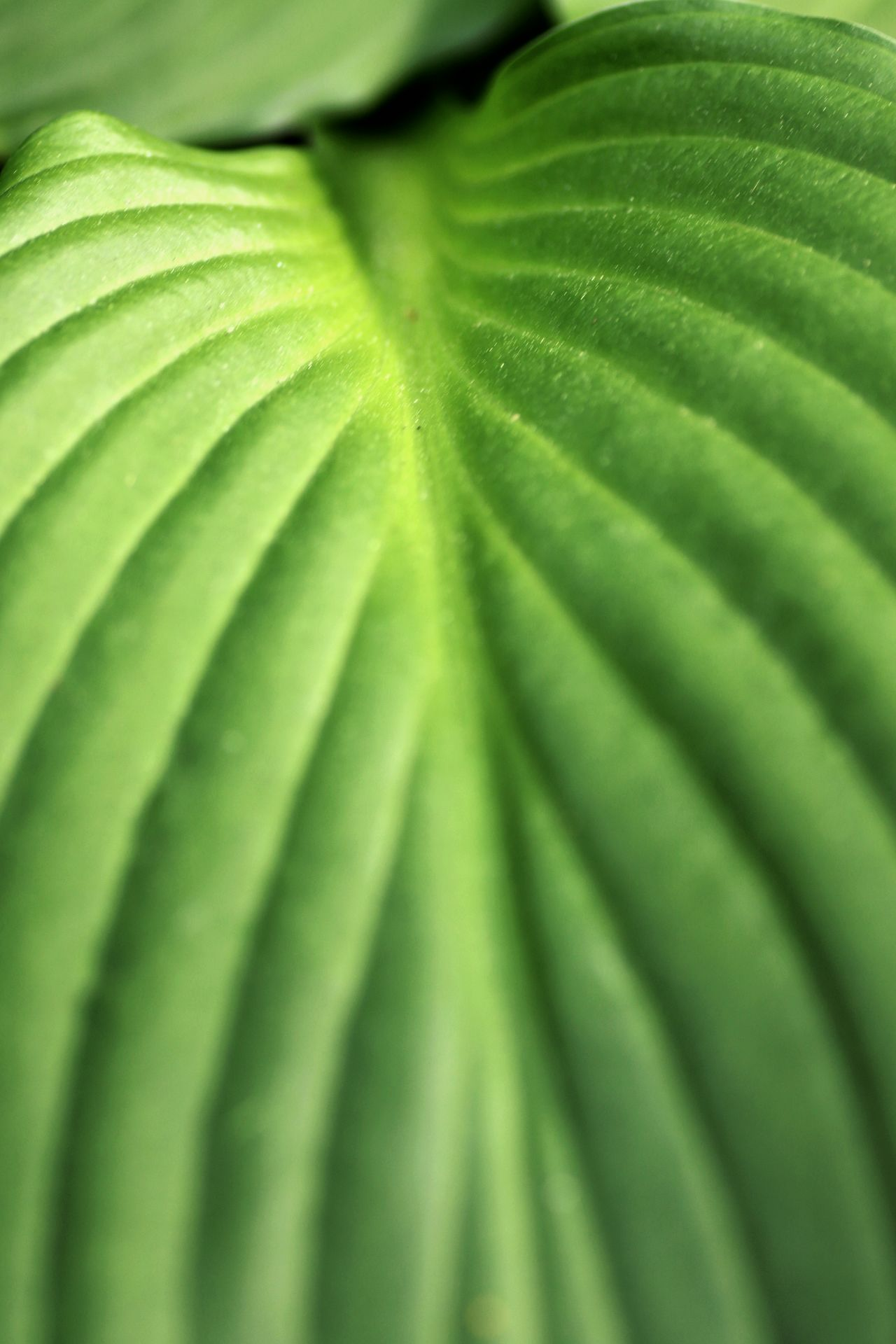 Backgrounds Beauty In Nature Close-up Day Freshness Full Frame Green Color Growth Leaf Nature No People Outdoors Plant