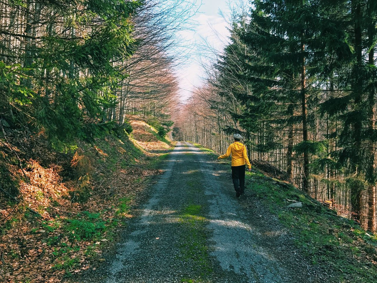 Real People Tree The Way Forward Full Length Rear View One Person Walking Nature Road Day Leisure Activity Lifestyles Forest Outdoors Women Beauty In Nature Men Sky Adult People