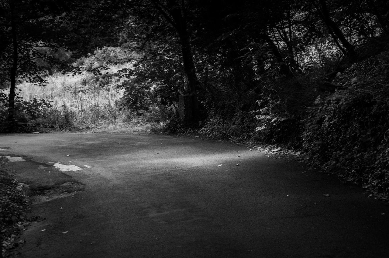 tree, forest, nature, no people, the way forward, tranquility, day, road, outdoors, growth, landscape, beauty in nature