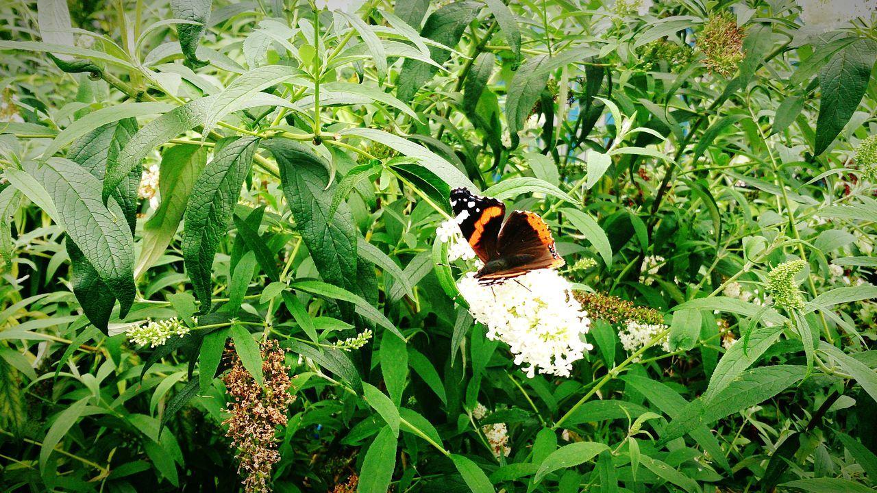 Schmetterling im Garten Hello World Bremen - Woltmershausen Animals