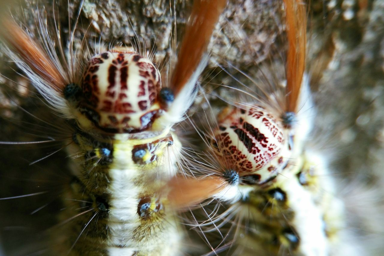 one animal, animal themes, spider, animals in the wild, close-up, animal wildlife, no people, jumping spider, day, nature, portrait, indoors