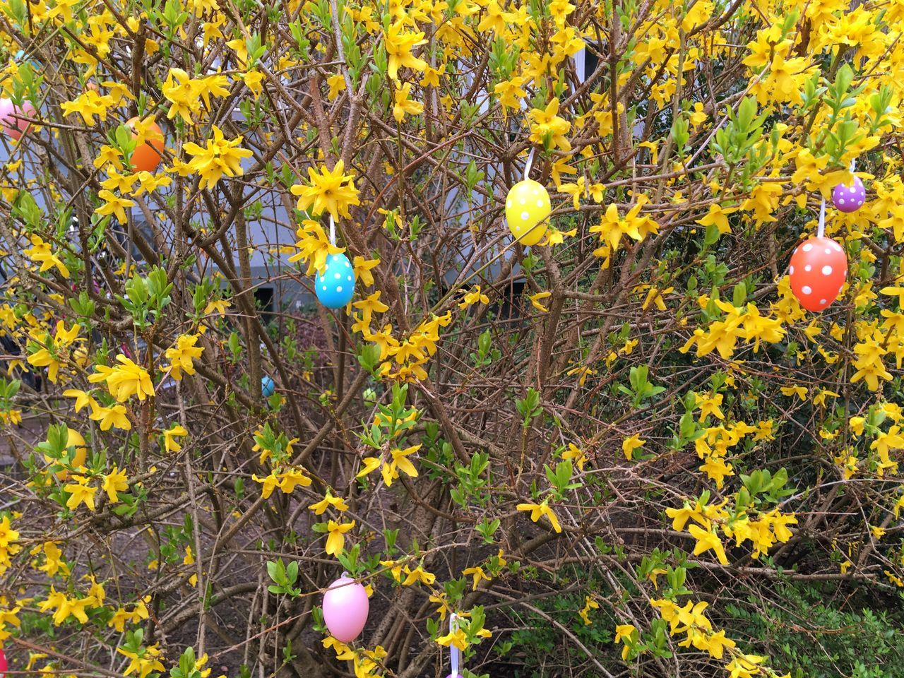 growth, flower, yellow, fragility, plant, freshness, no people, nature, field, day, outdoors, beauty in nature, easter, leaf, close-up, blooming