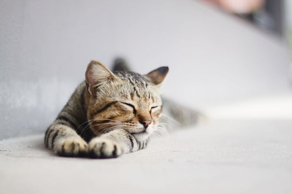 Beautiful stock photos of peaceful,  Animal Themes,  Close-Up,  Copy Space,  Day