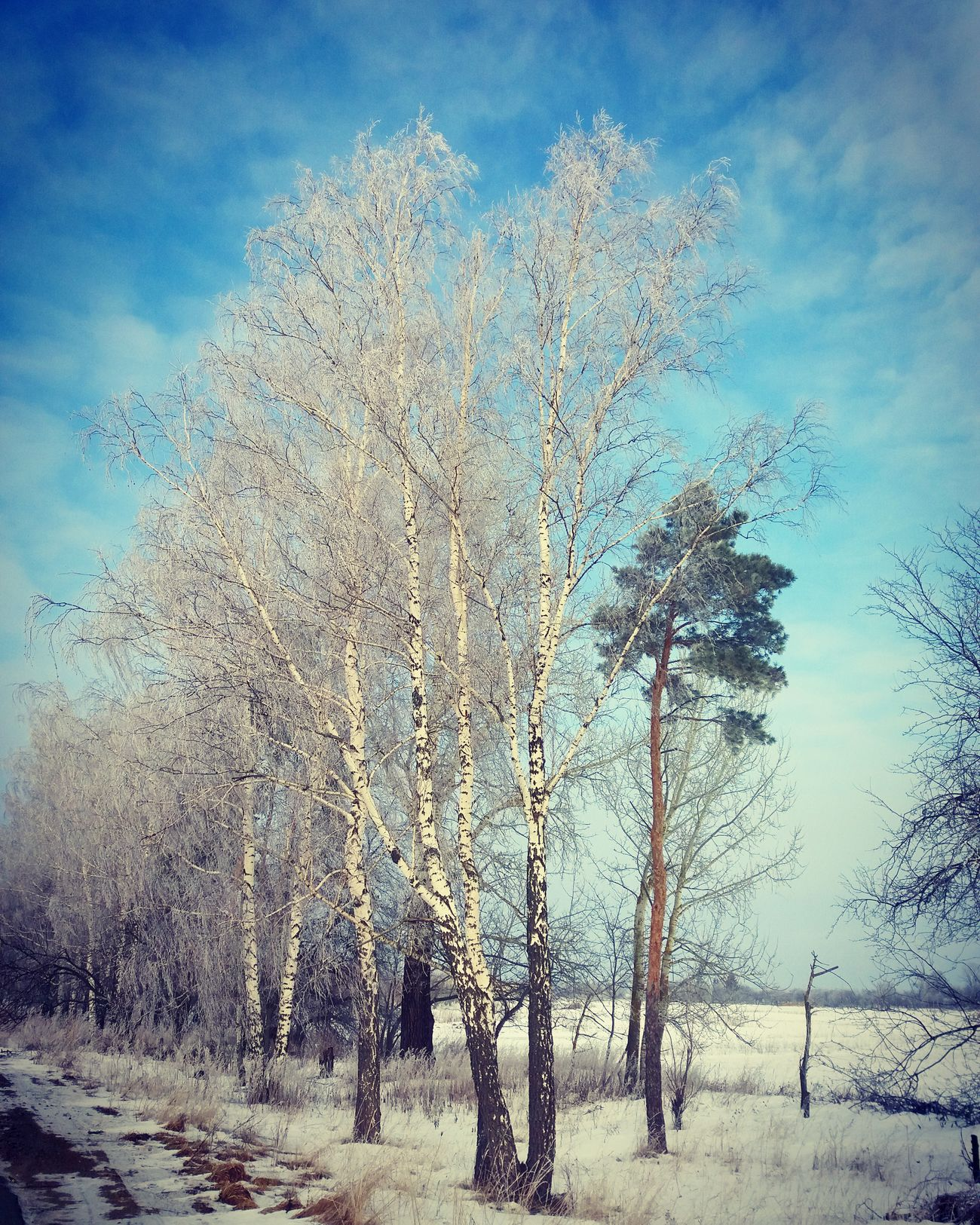 Freezingweather Beauty In Nature Taking Photos No People Forest Cold Temperature Snow ❄ Morning Landscape Phonephotography📱 Amazing View