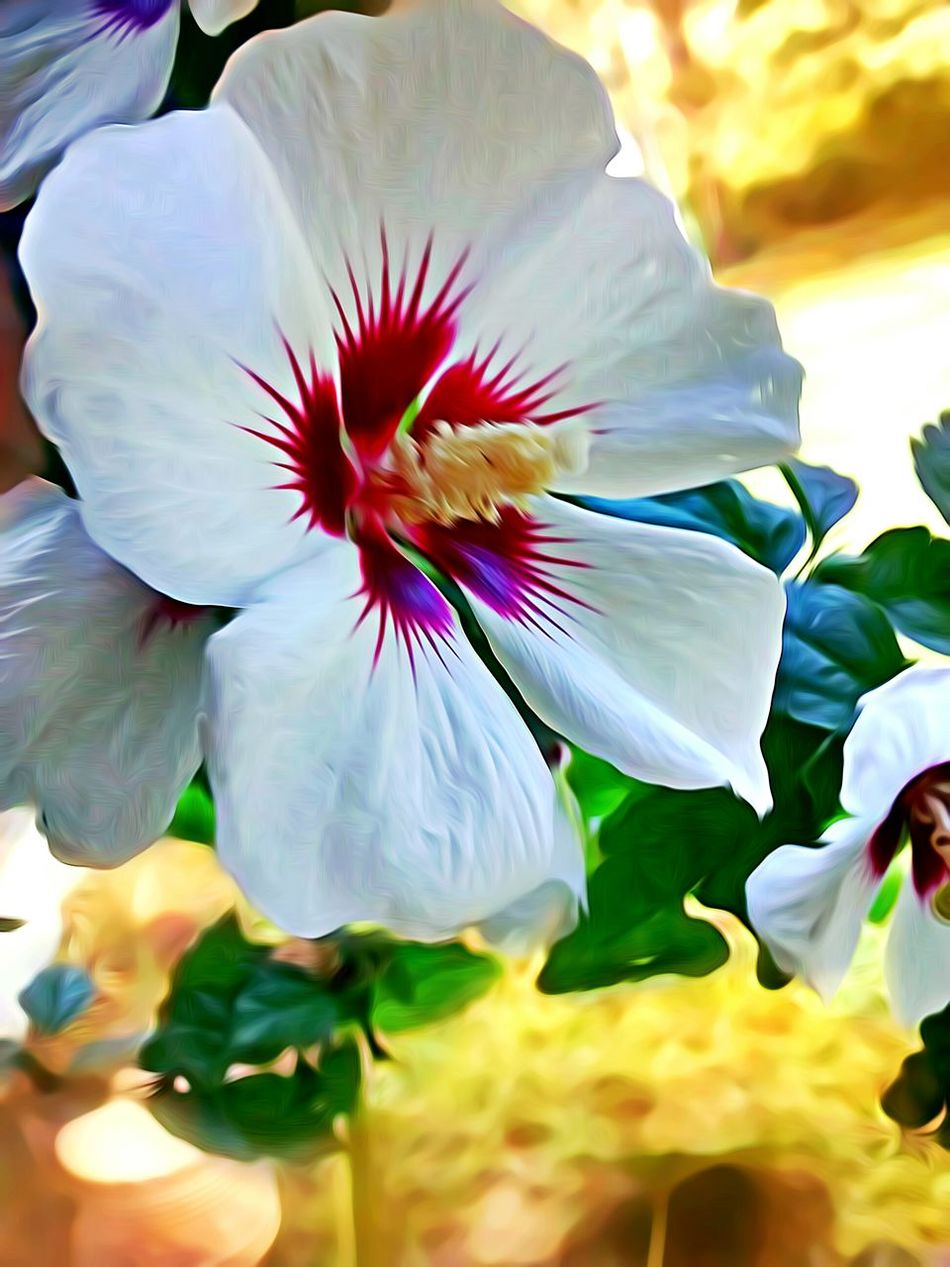 Rose Of Sharon Flower In Bloom Single Flower Botany Macro Vibrant Color The Innovator Check This Out Selective Focus Nature Beauty In Nature Close-up EyeEm Best Edits Eye4photography  Nature At Your Doorstep Focus On Foreground Flower My Art, My Soul... Outdoors Taking Photos Macro_flower EyeEm Nature Lover