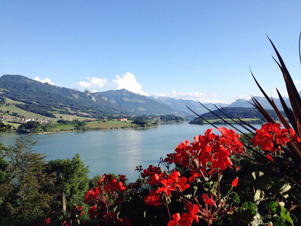 Flower Freshness Beauty In Nature Water Mountain Red Lake Nature Gruere Switzerland Relaxing