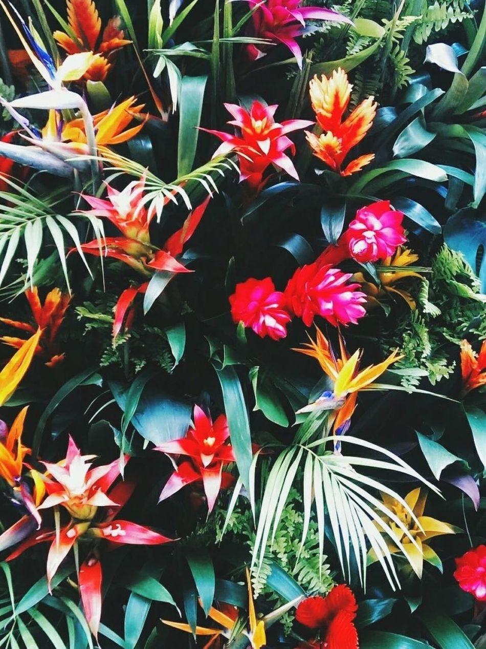 越是悲伤就越是要笑 凭什么只有我自己难过可你却什么都不知道 花朵 😚