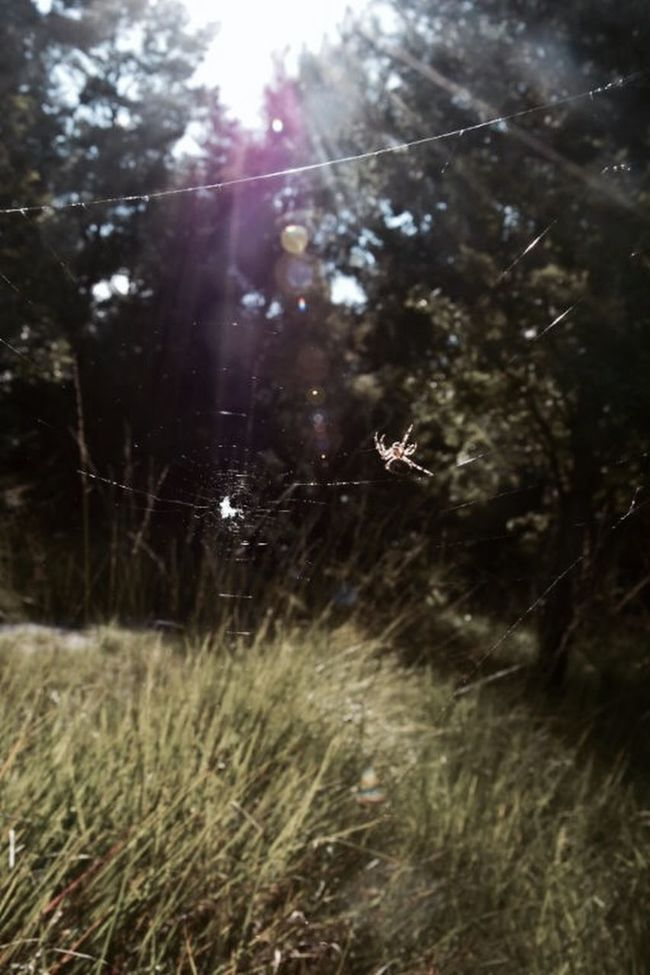 Spider And His Web EyeEm Nature Lover Nature Photography Beautiful Sunlight