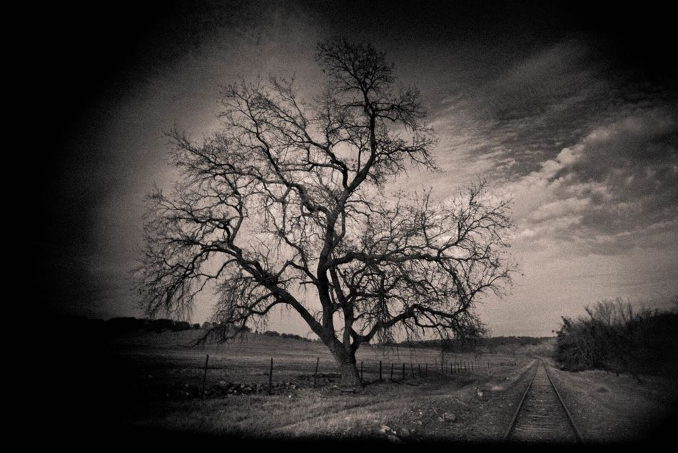 IMYE Loudthougts Takeawalkwithme Tree Bare Tree Nature Landscape Tranquility No People Tranquil Scene Outdoors Branch Sky Scenics Beauty In Nature Day EyeEm Nature Lover EyeEm Best Shots EyeEm Gallery First Eyeem Photo Bnw Taking Photos Bestoftheday EyeEm Photography
