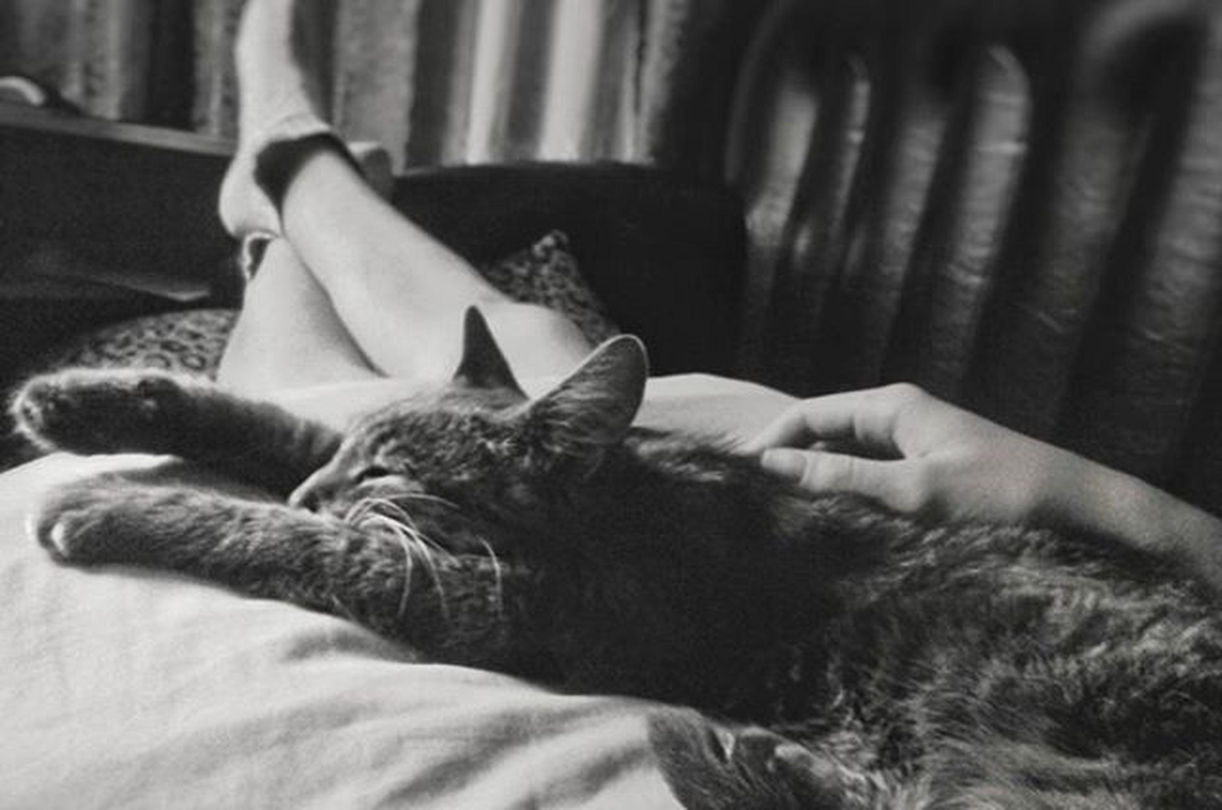 Без нее не то) вечноспящаякошка нашарадость Catsofinstagram Blackandwhite