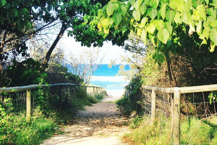 Nature path leading to the beach Nature Path Nature Path Path In Nature Foliage Green Leaves Beach Ocean Sand Beach Life Gold Coast Australia Background Backgrounds Australia Queensland Gold Coast The KIOMI Collection Blue Wave The Essence Of Summer My Favorite Photo Nature's Diversities Fine Art Photography Colour Of Life