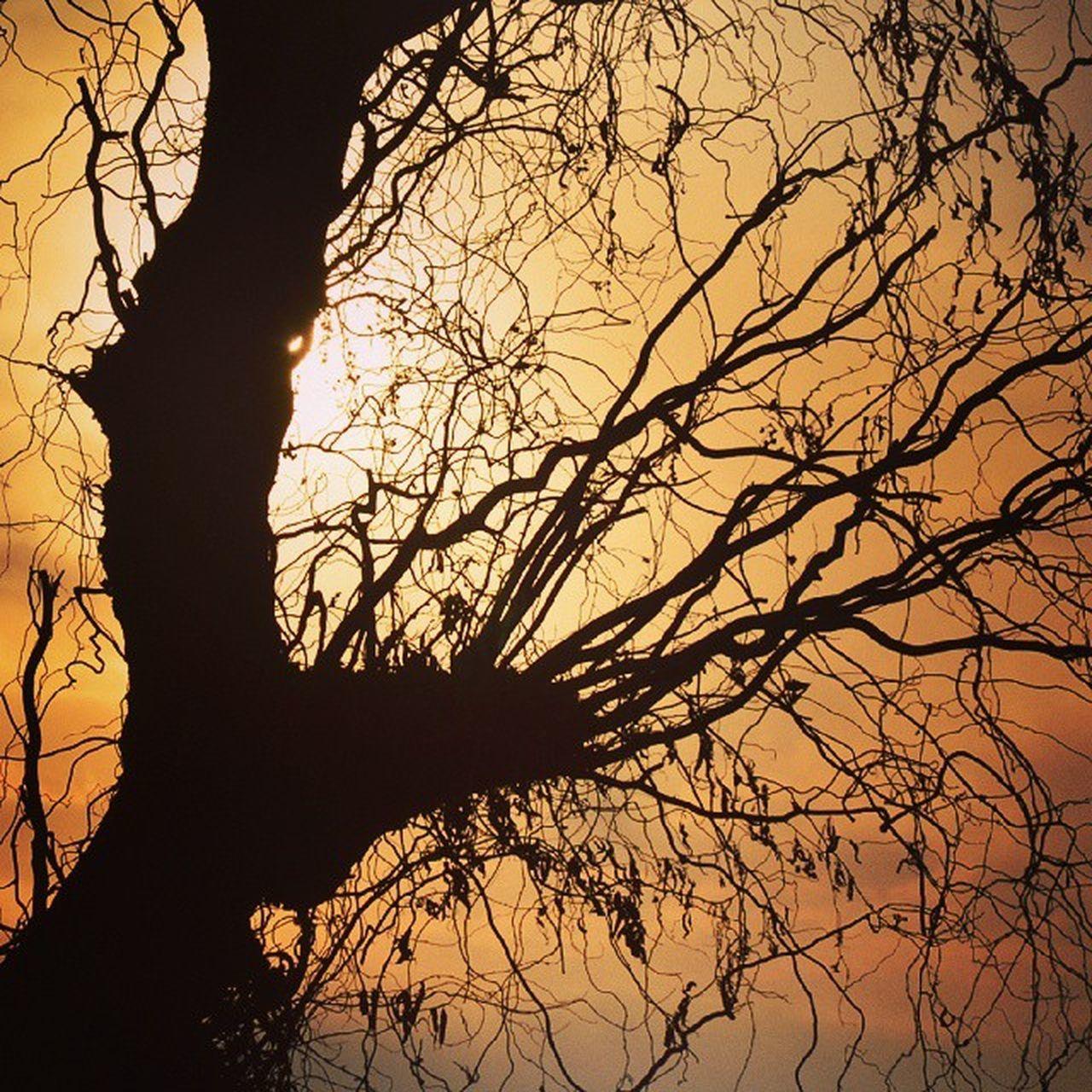 Silhhoutted Tree Branches Sun Silhouette Color Mayfair Evening Sunset Kasheer Kashmir Iphotograph Iamnikon IExploreMe IExploreKashmir IExplore IAmKashmir Itravel ITread Explore ExploringUnknown Revoshotsphotography Revoshots Revo RevoTheRebel