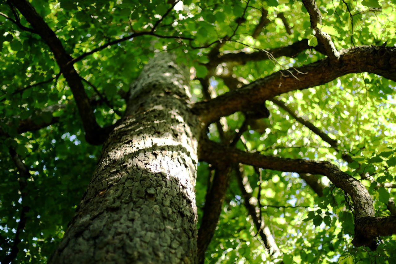 upwards Beauty In Nature Branch Close-up Day Forest Fresh Growth Leaves Light Low Angle View Nature No People Outdoors Selective Focus Tree Tree Trunk