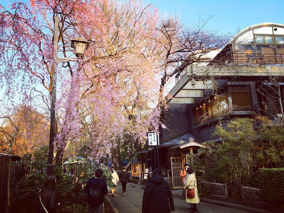 上野東照宮 上野 東京 Tokyo Tokyo,Japan Tokyo Days 花見 Beauty In Nature Hello World Relaxing Enjoying Life 3XSPUnity 上野恩賜公園