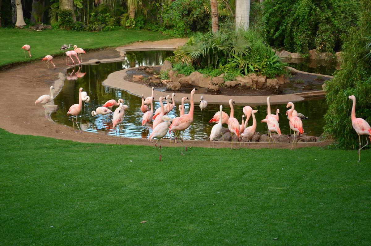Flamingos Animals Bird Day Flamingo Flamingo At The Zoo Flamingo Gardens Flamingos In Water Green Color Large Group Of Animals Nature Nature Outdoors