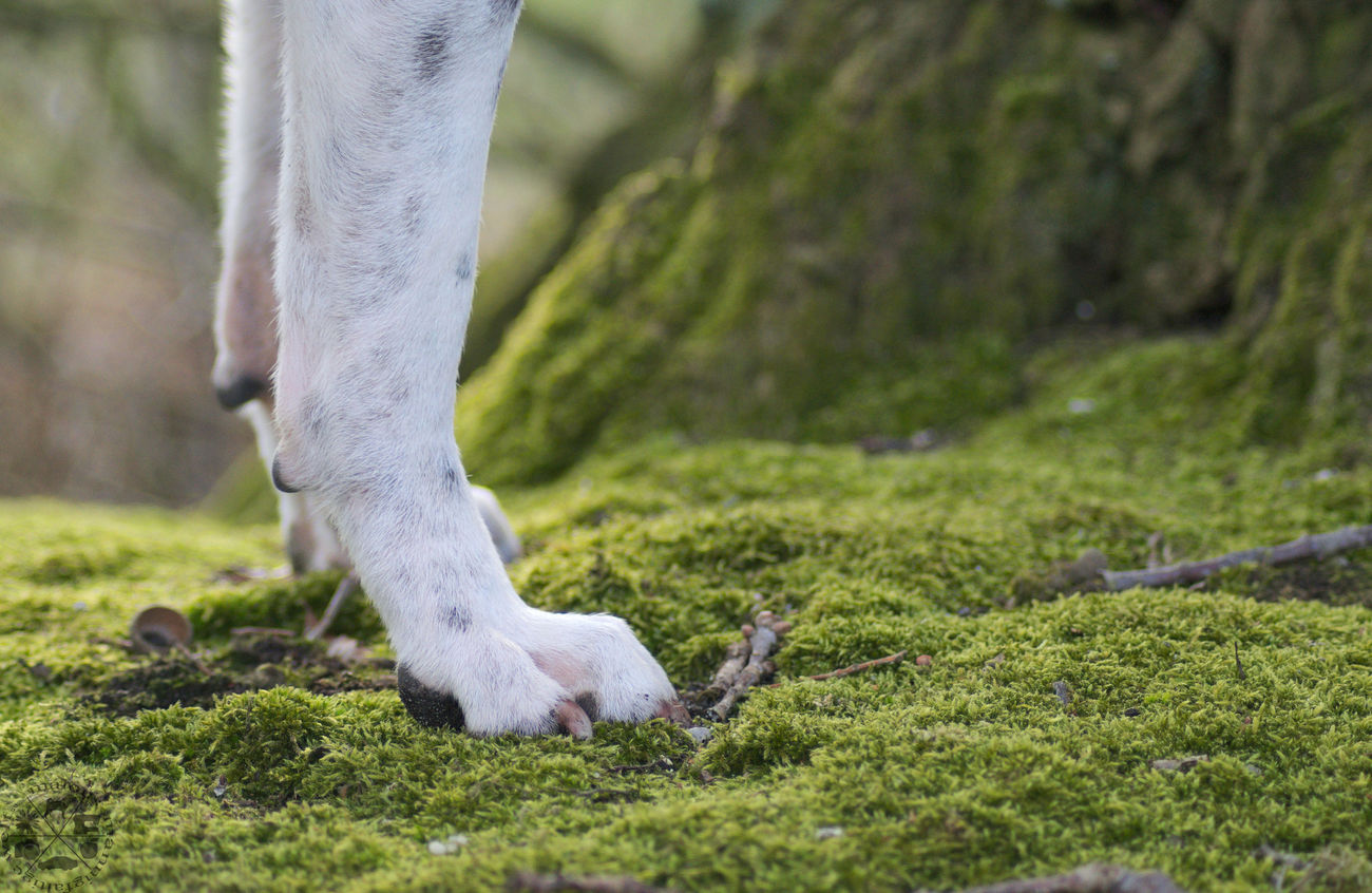 Low Section Grass Outdoors Nature Forest Wald Close-up Nahaufnahme Hundefotografie Dog Photography Hund Dog Celle Hannover Shar Pei Paws Pfoten