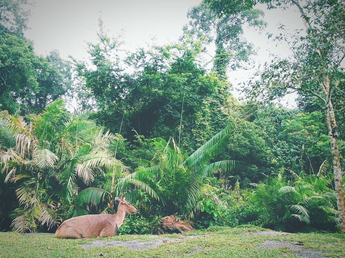 Dear Into The Woods EyeEm Nature Lover Relaxing Hello World Life Is Journey Khaoyai Thailand