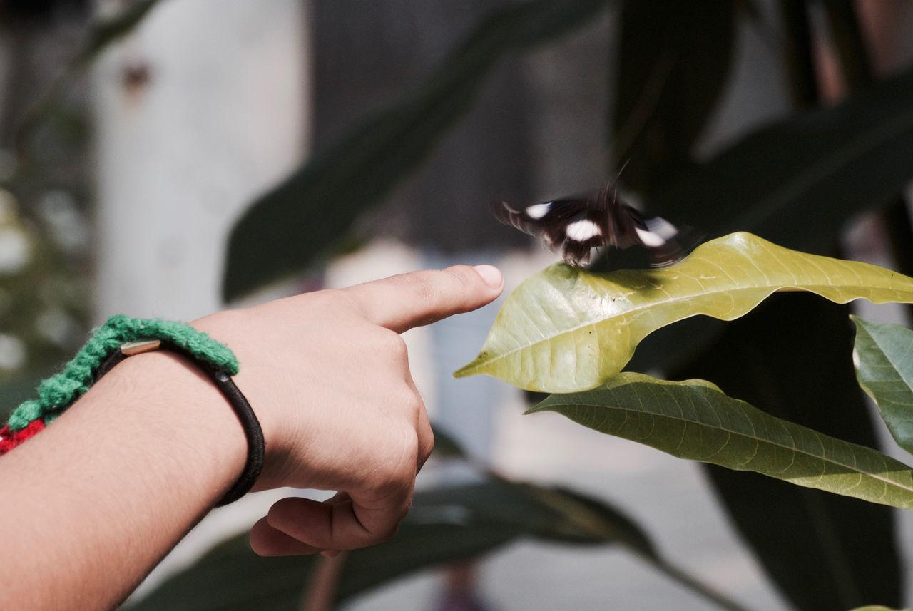 Beautiful stock photos of indonesia, Animal Themes, Animal Wildlife, Animals In The Wild, Bangkok