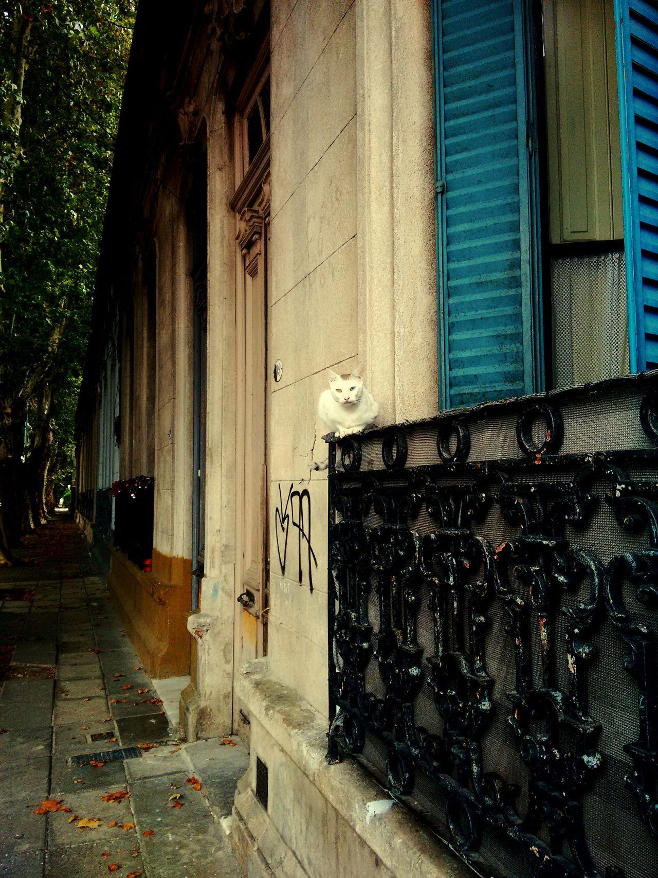 Cat Catlovers Villacrespo Buenosaires Argentina Bue
