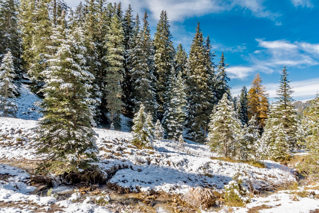 winter, snow, cold temperature, nature, tree, tranquil scene, tranquility, beauty in nature, scenics, no people, day, white color, cloud - sky, outdoors, sky, growth, landscape, forest
