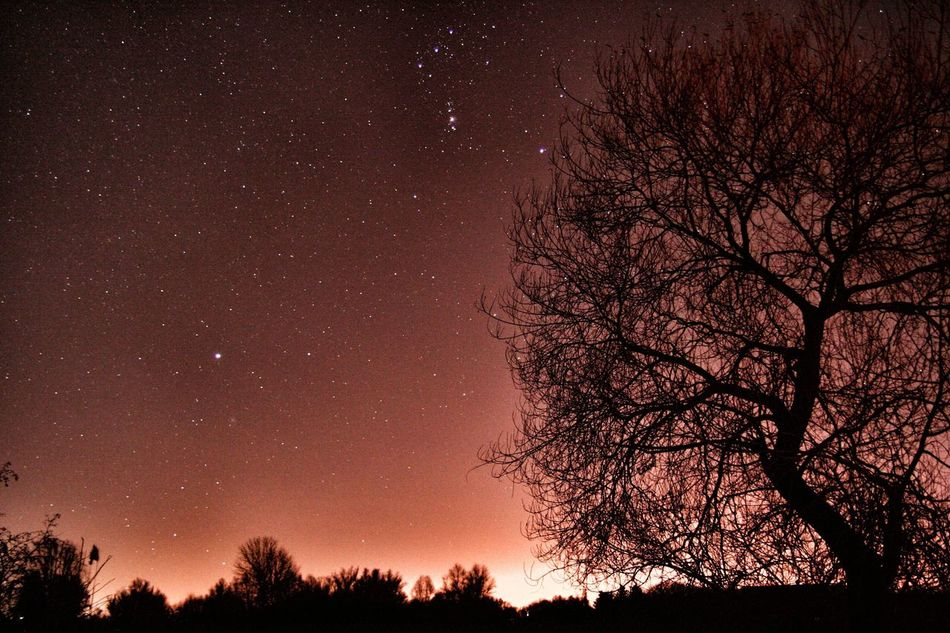 Reflection Water Beauty In Nature Star Field Sky Astronomy Star - Space Scenics Tranquility Bare Tree Low Angle View Galaxy Constellation Space Space And Astronomy Tranquil Scene Silhouette No People Branch Nature Night Tree Barleben