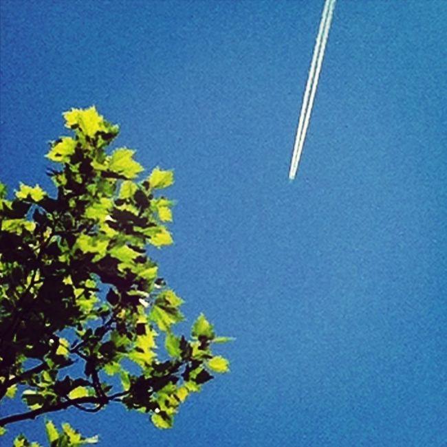 Sky Flight Trail Have A Nice Flight