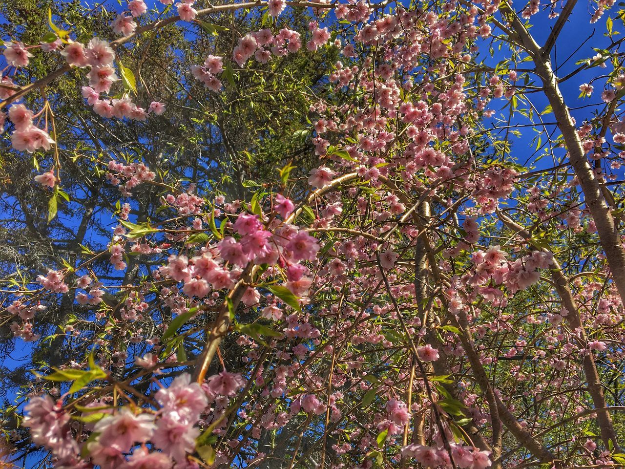 Day Outdoors No People Beauty In Nature Nature Tree Freshness Low Angle View Springtime Fragility Branch Leaf Blossom Flower Growth Flower Head Petal Tranquil Scene Scenics Leaves