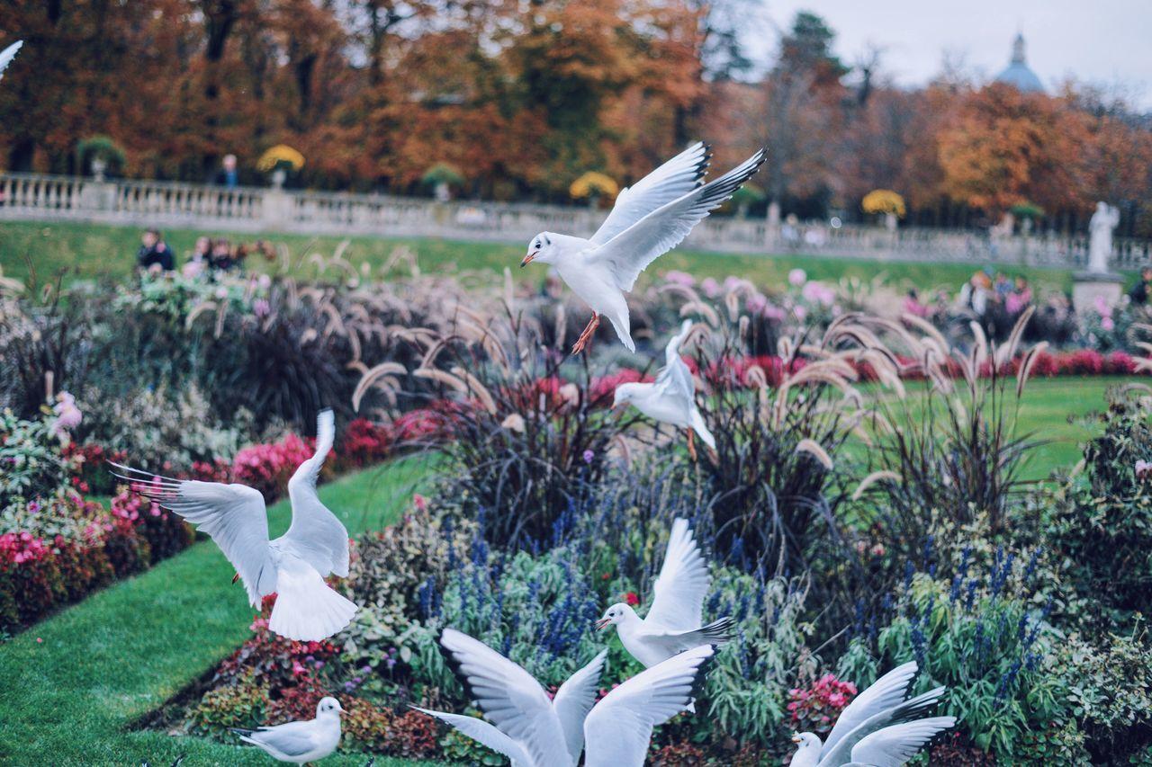 Sea Gulls Jardin Du Luxembourg Paris France