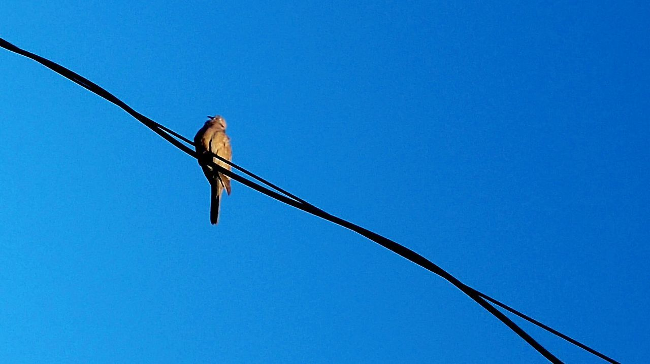 I Am A Bird !!! I Wanna Dive Into This Sky But This Blue Is Too Deep !!! Lets Change Our Point Of View ... Amazing Beauty in my City Wires 43 Golden Moments On The Way Colors Dove Animals Colour Of Life