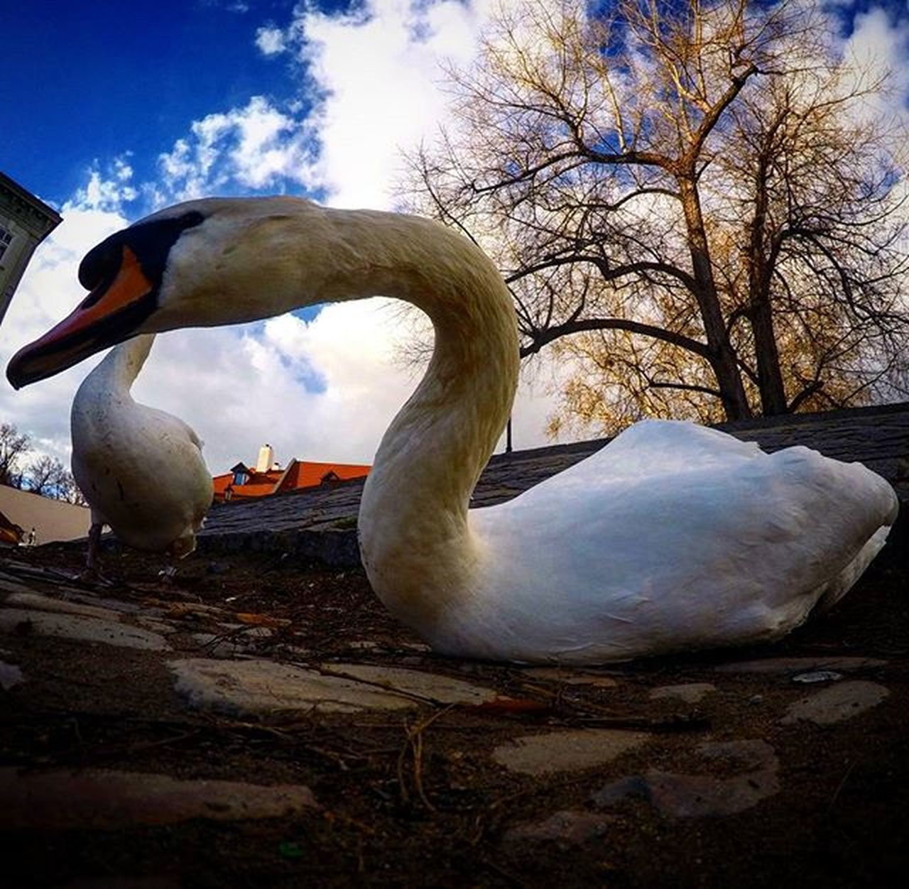 Gopro Cigno Praga Goodday Holiday FreeTime AnimalStyle Trip Travel Memories Walking Picoftheday Nature Swan Swanearth River Waiting Winter Clouds Relax Yesterday Beautiful Post Like Bestplace europelovepausagoproworld